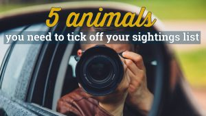 Kruger Stories 5 Animals