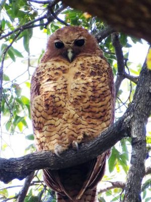 Source: Absolute Birding