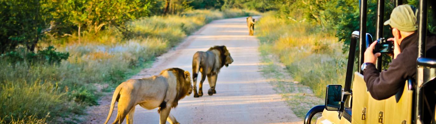 Kruger Stories